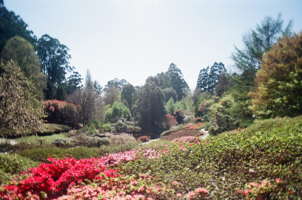 The National Rhododendron Gardens