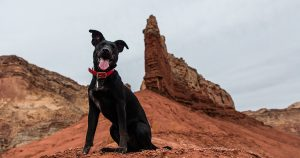 The 9 best dog destinations in Australia
