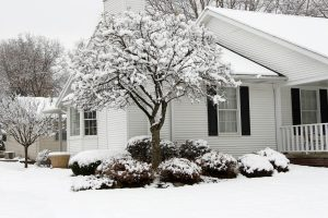 Winter auctions: how to get the upper hand when buying