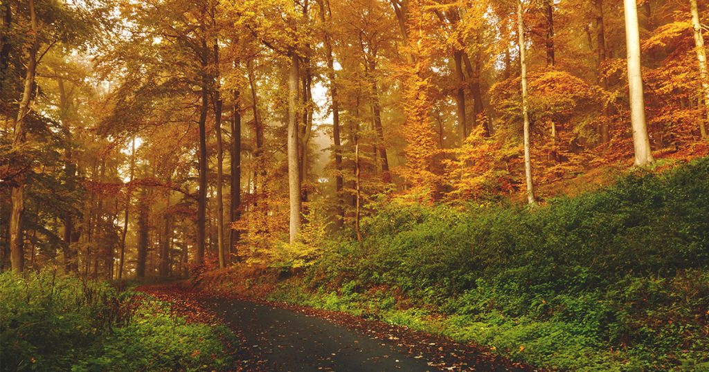 A beautiful forest filled with orange and brown colourings