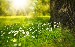 Property market update: what to expect out of Spring