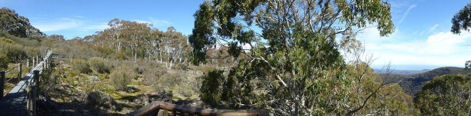 Horsearm Creek Lookout