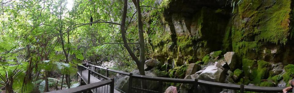Carnarvon Gorge - Moss Gardens