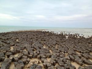 Go to Stromatolites, Hamelin Pool WA