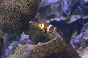 Go to Ocean Park Aquarium, Denham WA