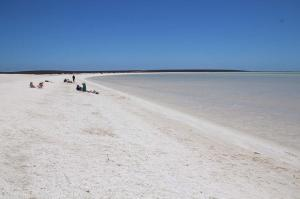Click to see more of Shell Beach, Hamelin Pool WA