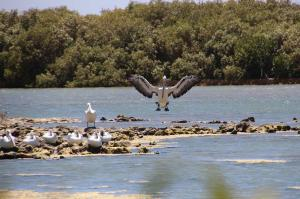 Go to Mangrove Bay - Bird Hide, Cape Range NP WA