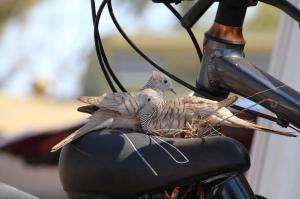 Go to Discovery Parks Port Hedland, Port Hedland WA