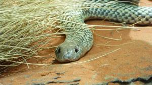 Click to see more of Alice Springs Reptile Centre, Alice Springs NT