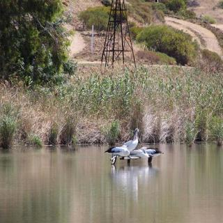 SUPing at Mannum