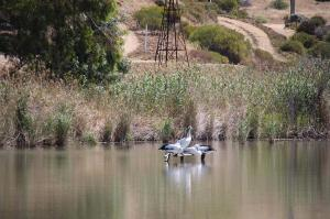 Go to SUPing at Mannum, Mannum SA