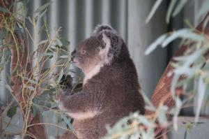 Click to see more of Waterways Wildlife Park, Gunnedah NSW