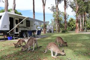 Go to NRMA Darlington Beach Holiday Park, Arrawarra NSW