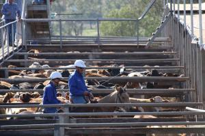 Click to see more of Roma Saleyards, Roma QLD