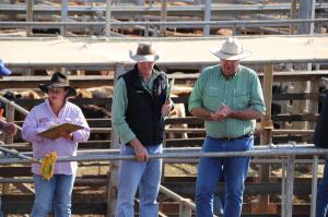 Go to Roma Saleyards, Roma QLD
