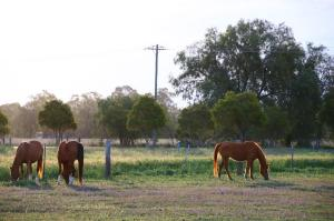 Click to see more of Pelican Rest Tourist Park, St George QLD