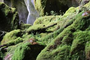 Click to see more of Carnarvon Gorge - Moss Gardens, Rolleston QLD