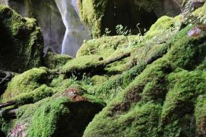 Go to Carnarvon Gorge - Moss Gardens, Rolleston QLD