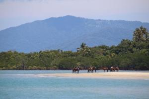 Go to CJs Bar & Grill, Cape Tribulation QLD