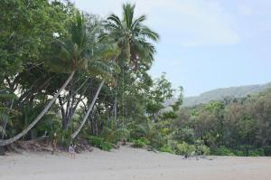 Click to see more of Cow Bay Beach, Cape Tribulation QLD