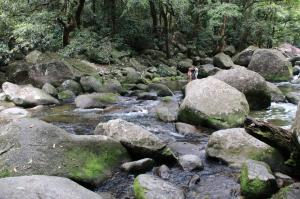 Go to Mossman Gorge - Rainforest Swimming Hole 1, Mossman Gorge QLD