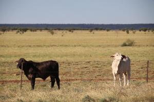 Click to see more of Flinders Hwy, Qld, QLD