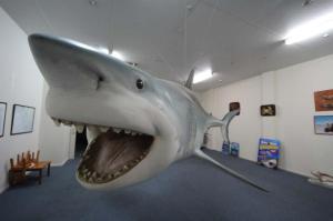 Go to Record Shark Catch, Streaky Bay SA
