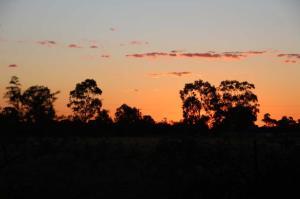 Go to Nyngan Riverside Tourist Park, Nyngan NSW