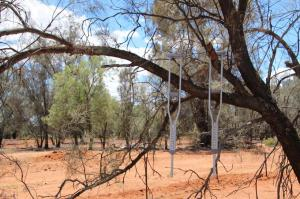 Click to see more of Lilyvale Rest Area, Cobar NSW