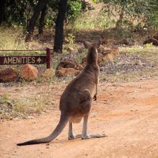 Outback Caravan Park & Camp Ground