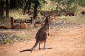 Go to Outback Caravan Park & Camp Ground, Undara Experience QLD