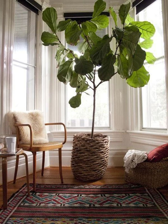 Large plant focal point