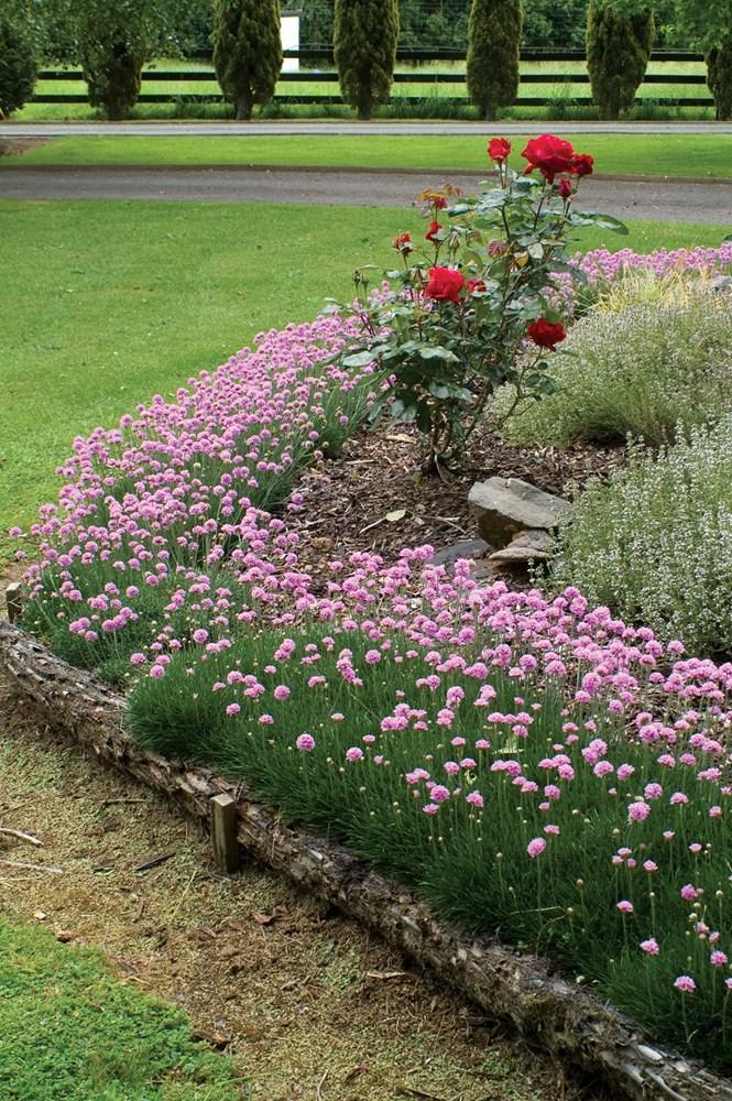 Website/Plants/1498083111/Images/Gallery/a_prettypetite_02.0.jpg