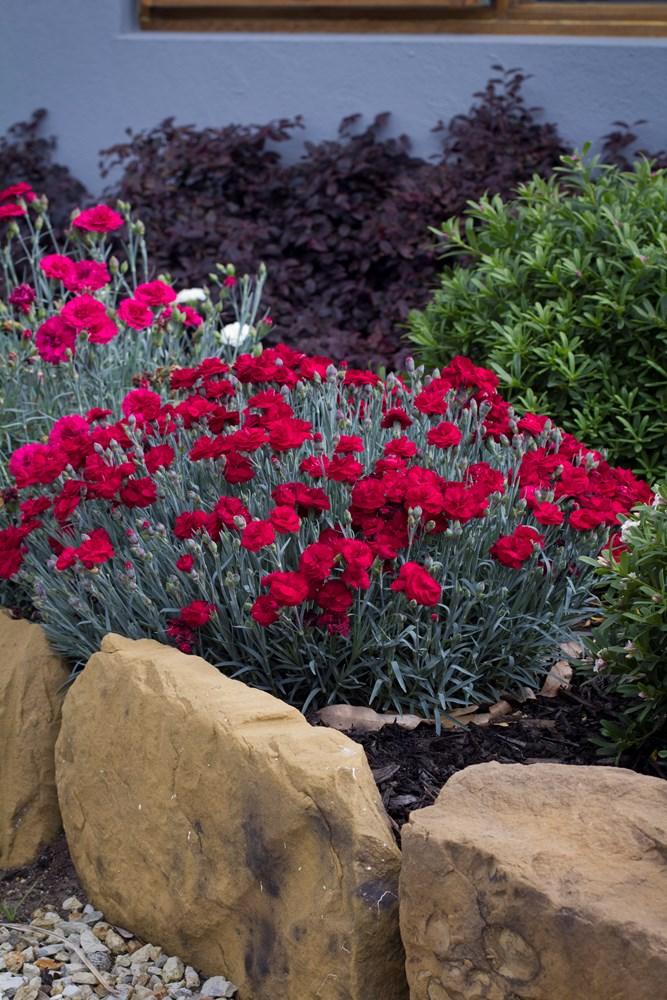 Website/Plants/1622088354/Images/Gallery/d_rebekah_02.0.jpg