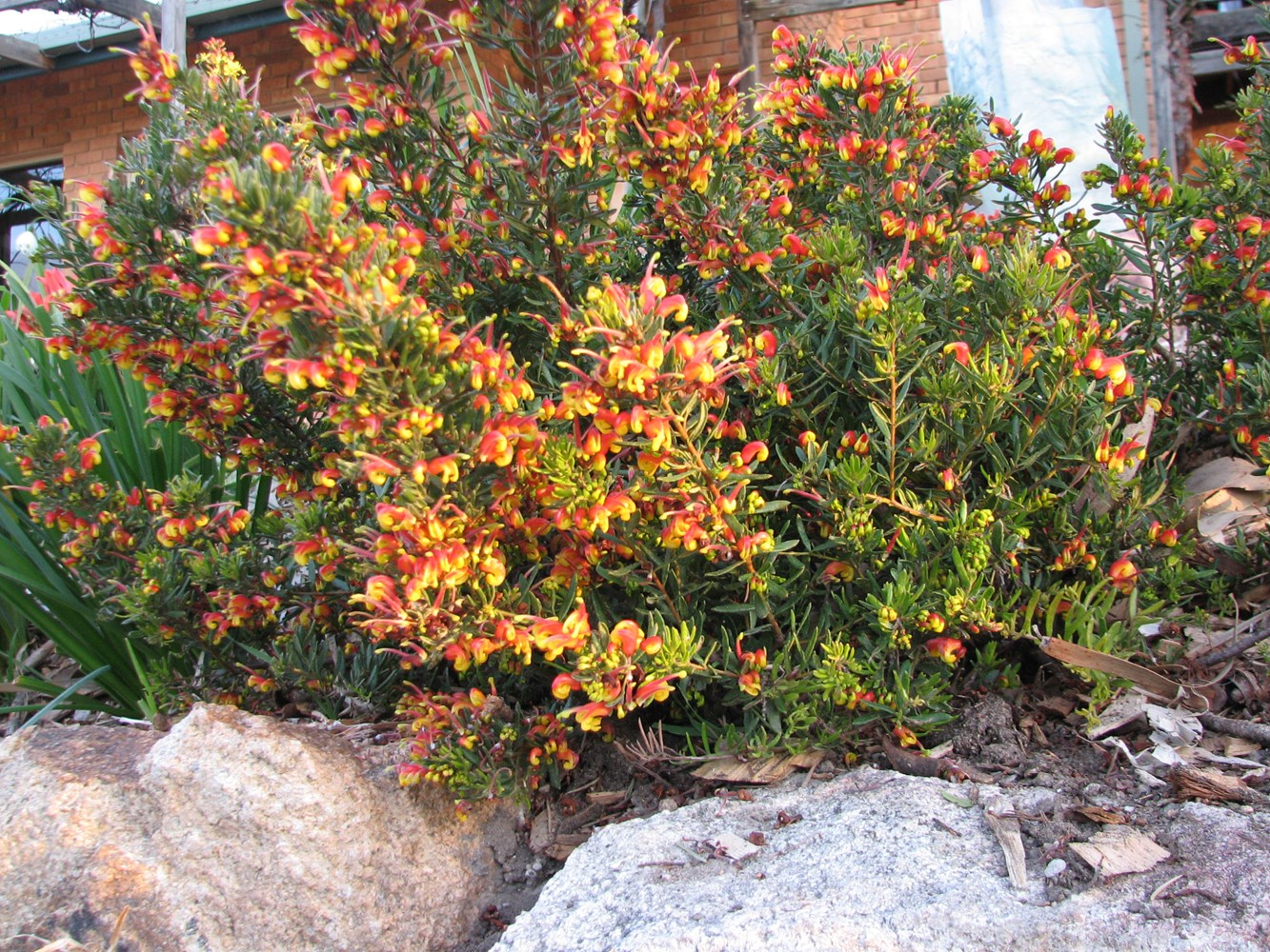 Website/Plants/1652873765/Images/Gallery/g_firecracker_01.0.JPG
