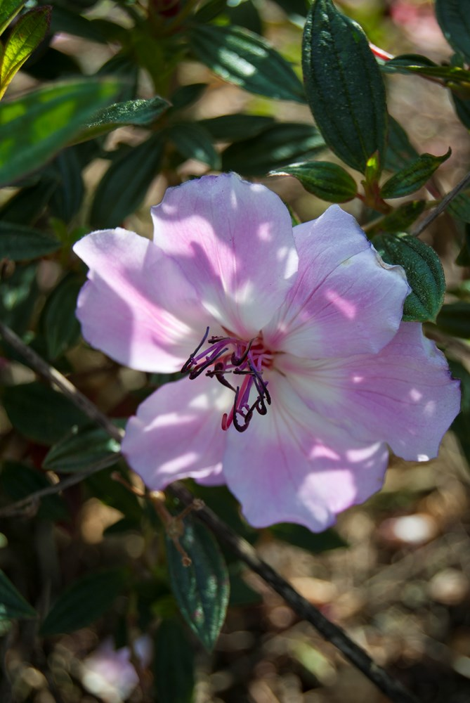 Website/Plants/1712310008/Images/Gallery/t_peach_01.0.jpg
