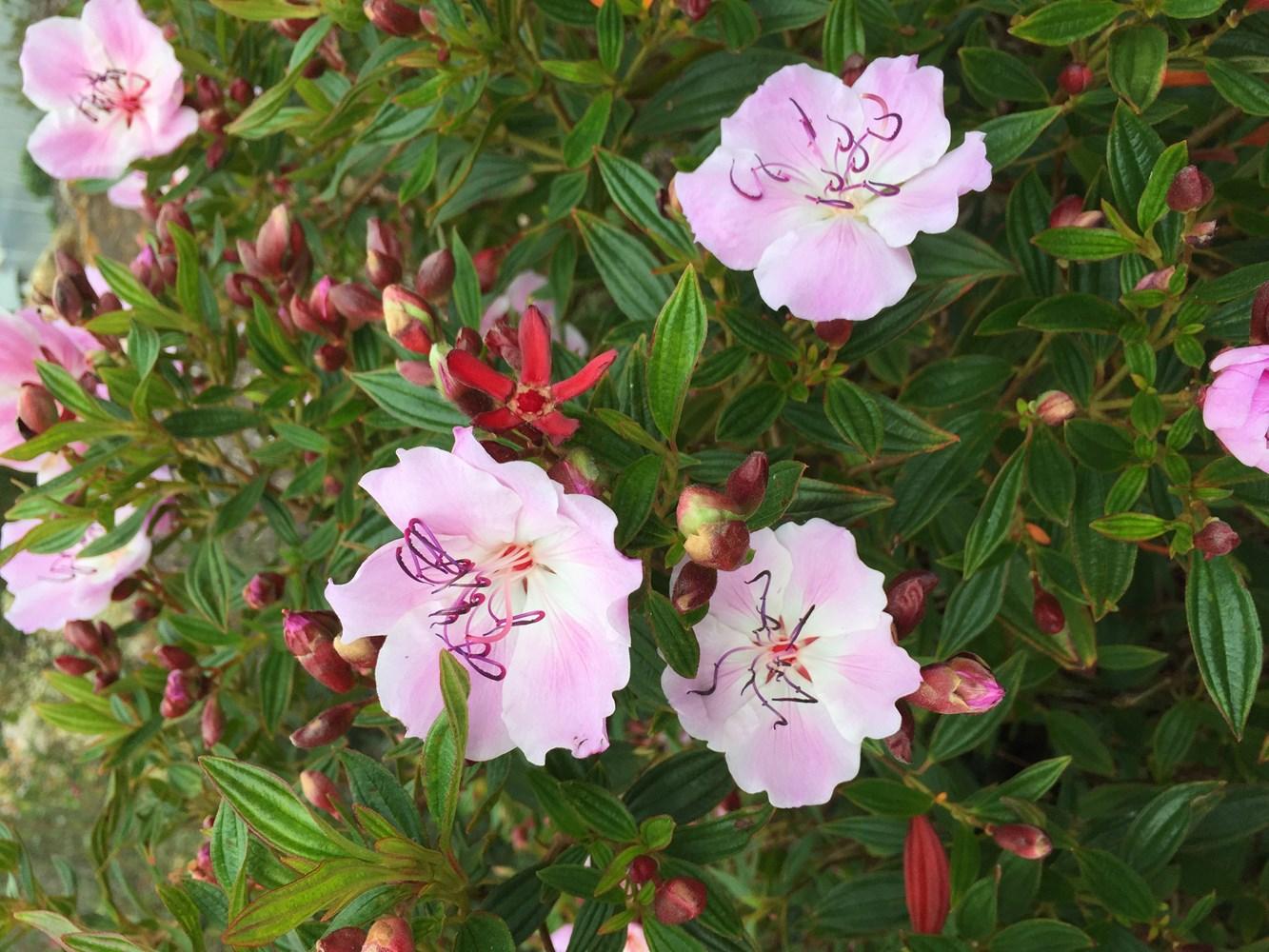 Website/Plants/1712310008/Images/Gallery/t_peach_04.0.jpg