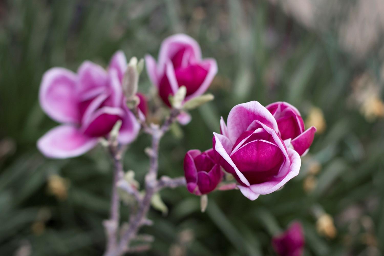 Website/Plants/1847926382/Images/Gallery/m_genie_02.0.jpg