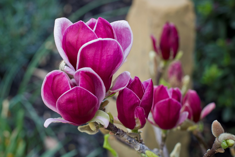 Website/Plants/1847926382/Images/Gallery/m_genie_05.0.jpg