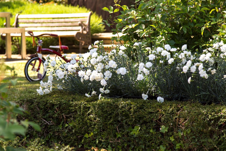 Website/Plants/2144398557/Images/Gallery/d_memories_01.0.jpg