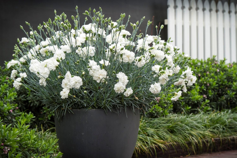 Website/Plants/2144398557/Images/Gallery/d_memories_07.0.jpg