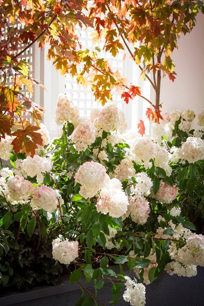 Website/Plants/2144398583/Images/Gallery/h_sundaefraise_03.0.jpg