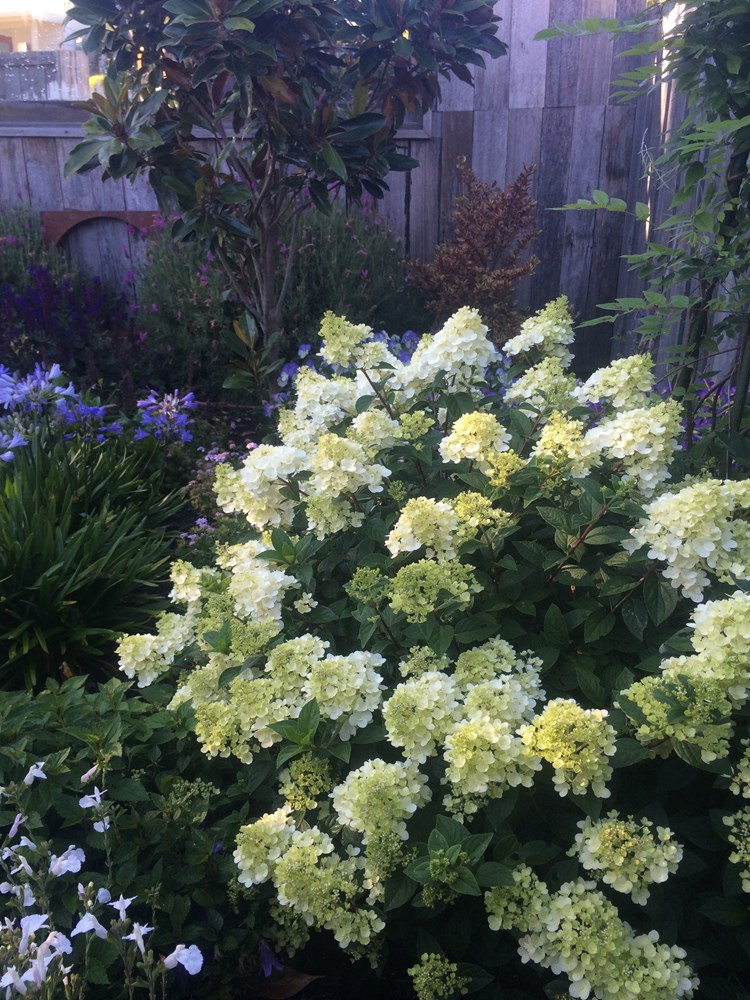 Website/Plants/2144398583/Images/Gallery/h_sundaefraise_10.0.jpg