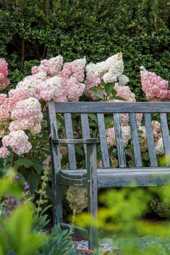 Website/Plants/2144398583/Images/Gallery/h_sundaefraise_13.0.jpg