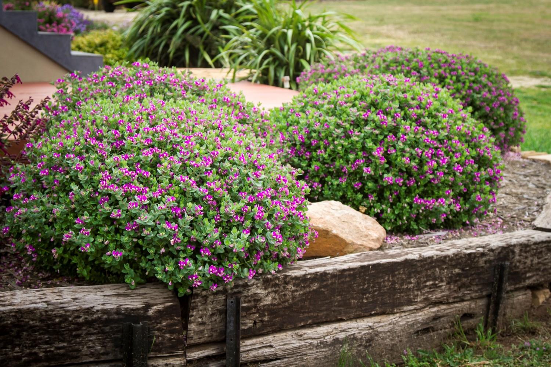 Website/Plants/2144398700/Images/Gallery/p_littlebibi_08.0.jpg