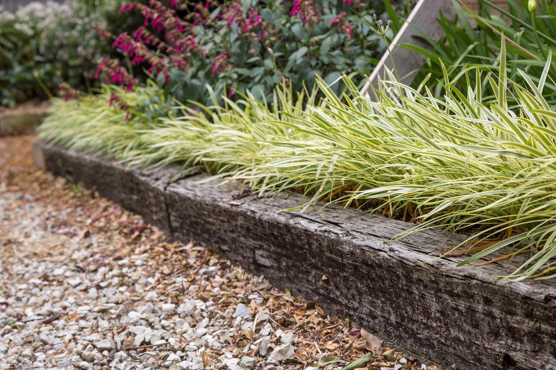 Website/Plants/2144398750/Images/Gallery/a_golden_drop_07.0.jpg