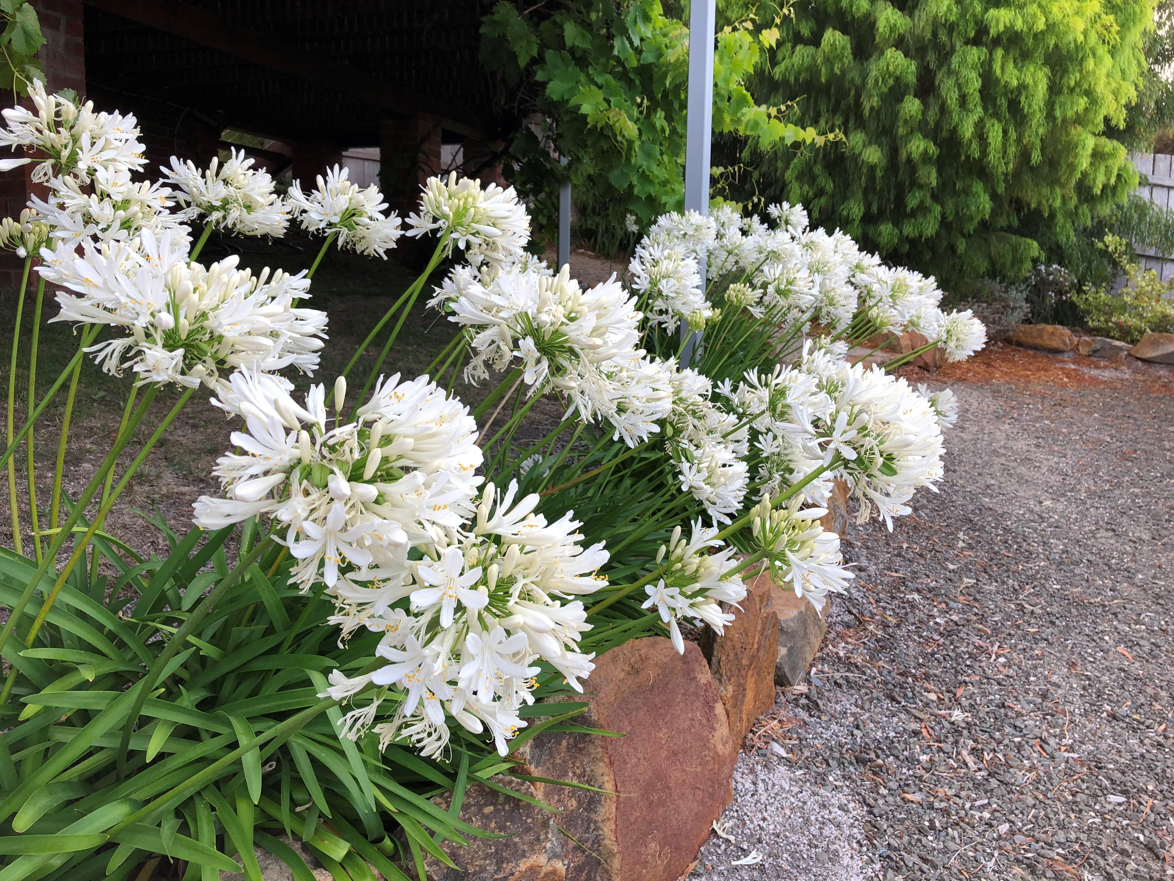 Website/Plants/2144398837/Images/Gallery/IMG_0791.0.jpg