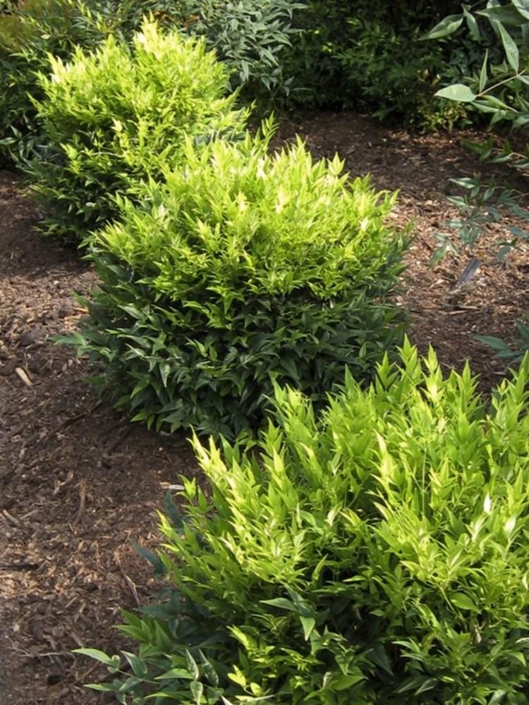 Website/Plants/2144398931/Images/Gallery/n_lemon_and_lime_04.0.jpg