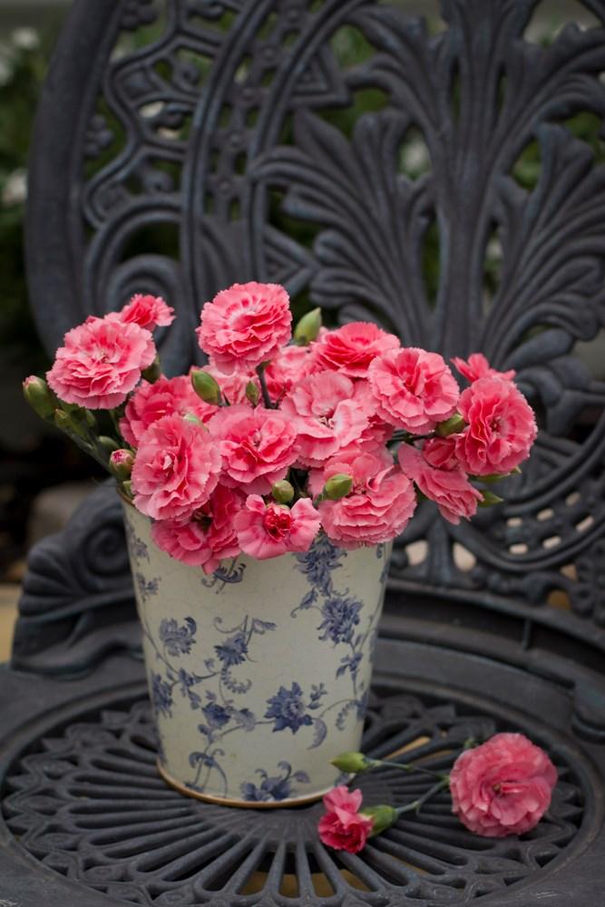 Website/Plants/508454456/Images/Gallery/d_romance_02.0.jpg