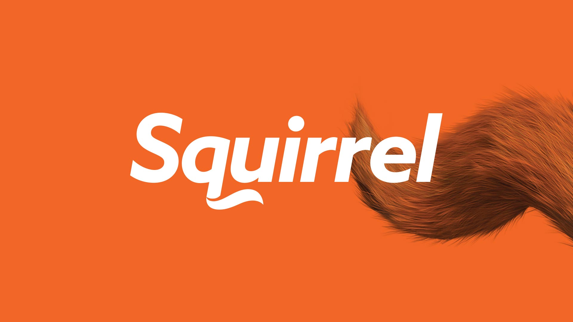 Squirrel hero image